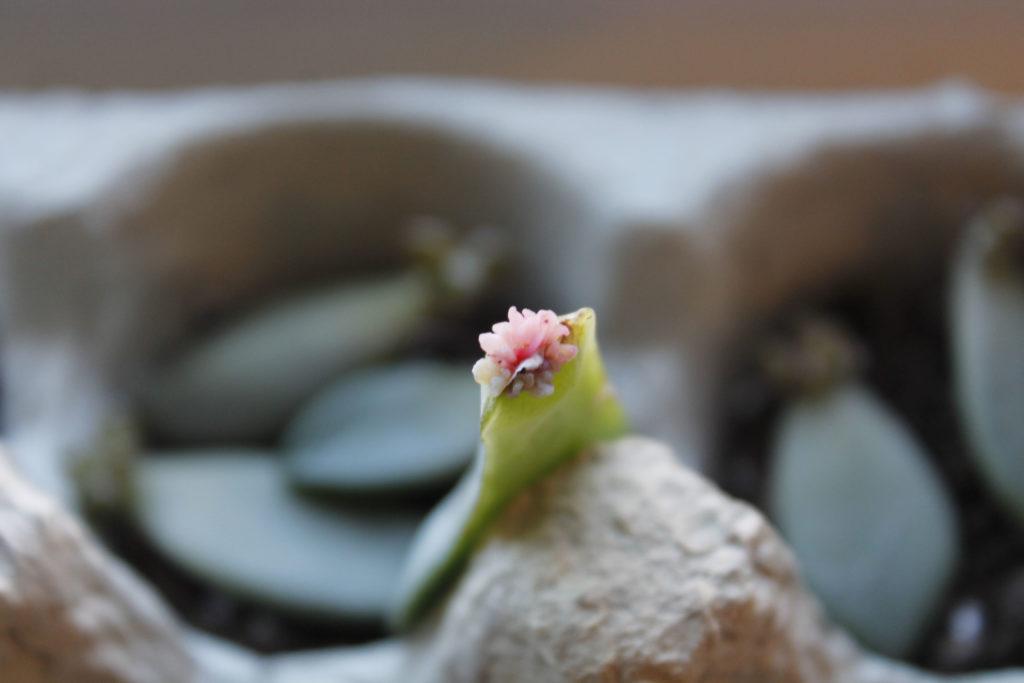 DIY succulent